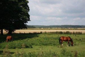 view from Granary cottage horses in paddock